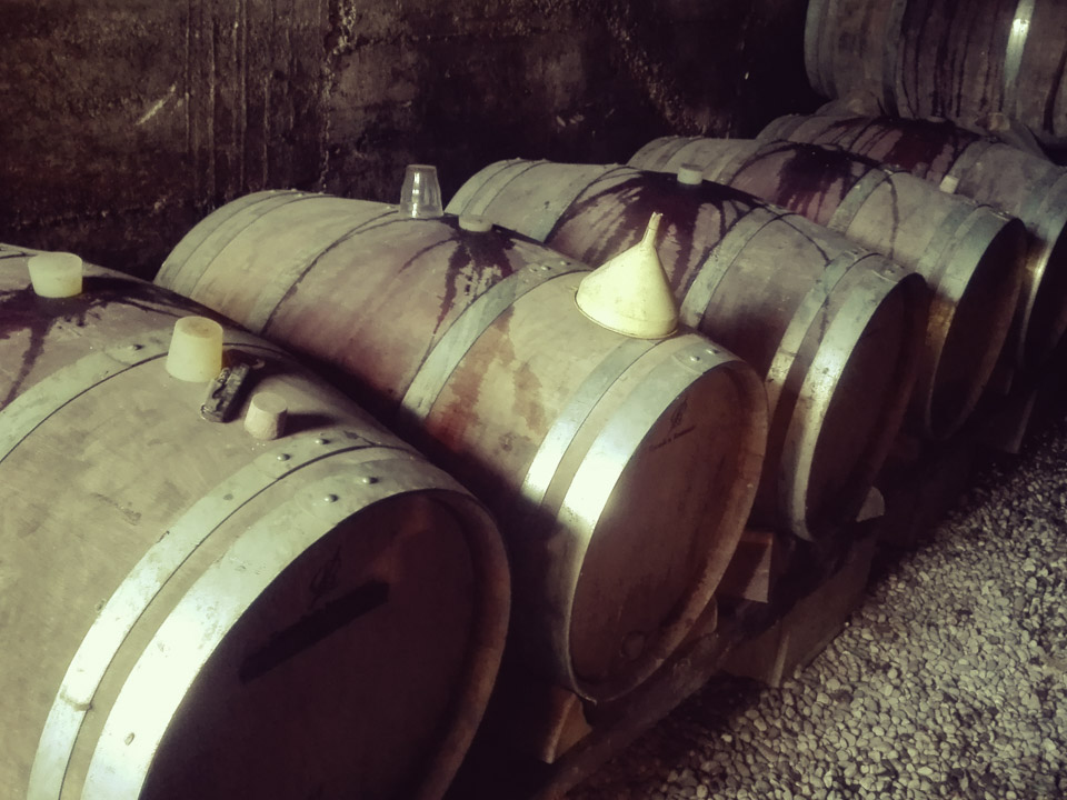 photo vinification n°7